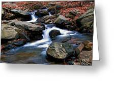 Amicalola Stream Greeting Card