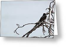 Amid The Branches Greeting Card
