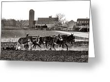 Amish Agriculture  Greeting Card