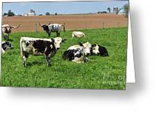 Amish Farm With Spotted Cows And Cattle In A Field Greeting Card