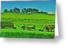Amish Gathering Hay Greeting Card