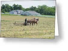 Amish Girl Raking Hay As Painting Greeting Card