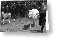 Amish Girl With Her Colt Greeting Card