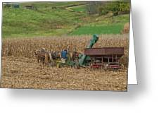 Amish Harvest In Ohio  Greeting Card