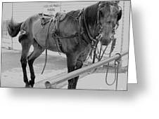 Amish Horse Greeting Card