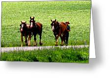 Amish Horse Team Greeting Card