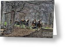 Amish Horses In Harness Greeting Card