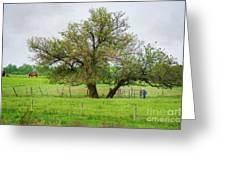 Amish Man And Tree Greeting Card