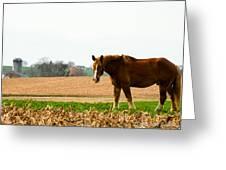 Amish Work Horse Greeting Card