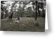 Among The Daffodils Greeting Card