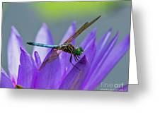 Among The Lilies Greeting Card