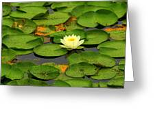 Among The Lily Pads Greeting Card