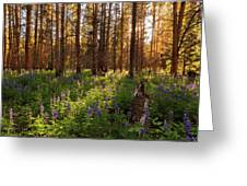 Among The Lupines Greeting Card