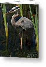 Among The Reeds Greeting Card