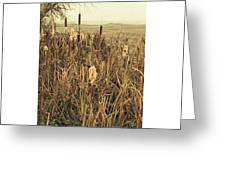*among The Reeds  #landscape Greeting Card