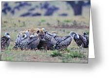 Among The Vultures 2 Greeting Card