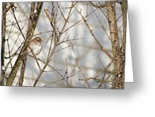Amongst The Branches Greeting Card