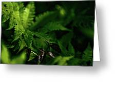 Amongst The Fern Greeting Card