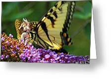Amorous Butterfly And Faerie Greeting Card