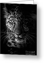 Amur Cub Greeting Card