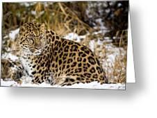 Amur Leopard In A Snowy Forrest Greeting Card