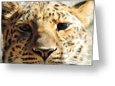 Amur Leopard Stare Greeting Card