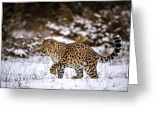 Amur Leopard Walks In A Snowy Forest Greeting Card