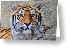 Amur Siberian Tiger Greeting Card