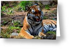 Amur Tiger 3 Greeting Card