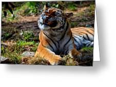 Amur Tiger 6 Greeting Card