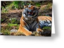 Amur Tiger 7 Greeting Card
