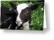 Amy's Lamb Greeting Card