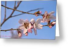 An Almond Tree Blooming Greeting Card