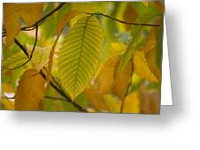 An American Chestnut Tree Castanea Greeting Card
