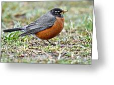 An American Robin With Muddy Beak Greeting Card