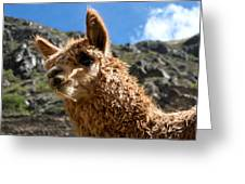 An Andean Icon Greeting Card