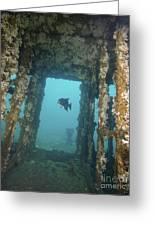 An Atlantic Spadefish Swims Amongst Greeting Card