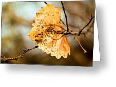 An Autumn Leaf Suspended Greeting Card