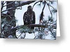 An Eagle Gazing Through Snowfall Greeting Card