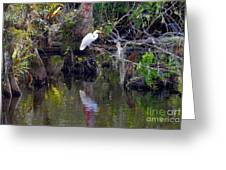 An Egrets World Greeting Card
