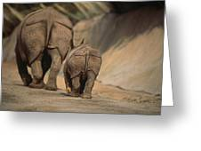 An Indian Rhinoceros And Her Baby Greeting Card by Michael Nichols