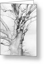 An Oak In The Park 2002  Greeting Card