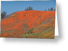 An Ocean Of Orange On The Mountain Top Greeting Card