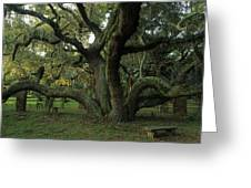 An Old Live Oak Draped With Spanish Greeting Card by Michael Melford