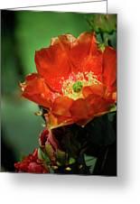 An Orange Dream  Greeting Card