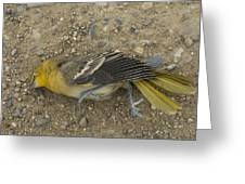 An Orchard Oriole On A Gravel Road Greeting Card