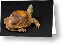 An Ornate Box Turtle With A Fiberglass Greeting Card