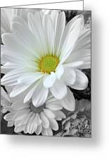 An Outstanding Daisy Greeting Card