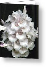 An Unusual Orchid Greeting Card
