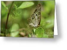 Anartia Butterfly In Wonderland  Greeting Card